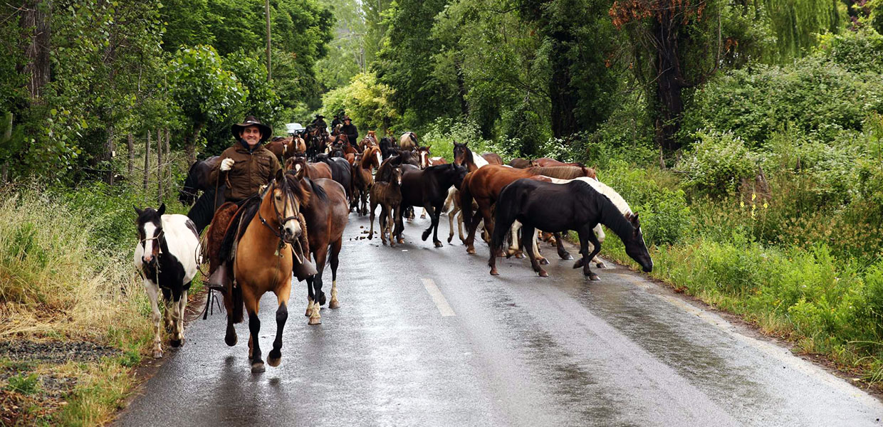 authentic horse trekking in chile - cowboy experience
