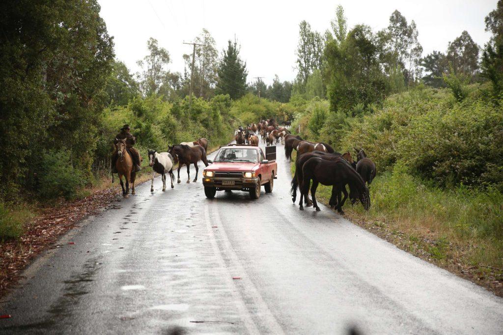 Pferdetrekking Chile - Auto überhold wilde Herde